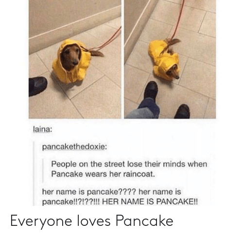 laina: laina:  pancakethedoxie:  People on the street lose their minds when  Pancake wears her raincoat.  her name is pancake???? her name is  pancake!!?!??!!! HER NAME IS PANCAKE!! Everyone loves Pancake