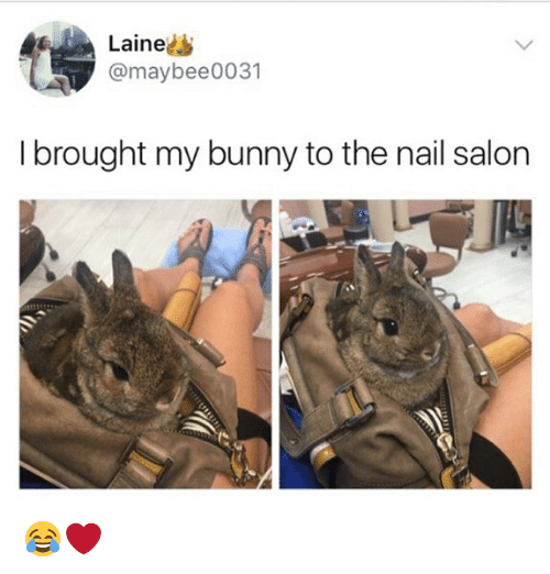 Memes Nail Salon And Laine Maybee0031 I Brought My Bunny To
