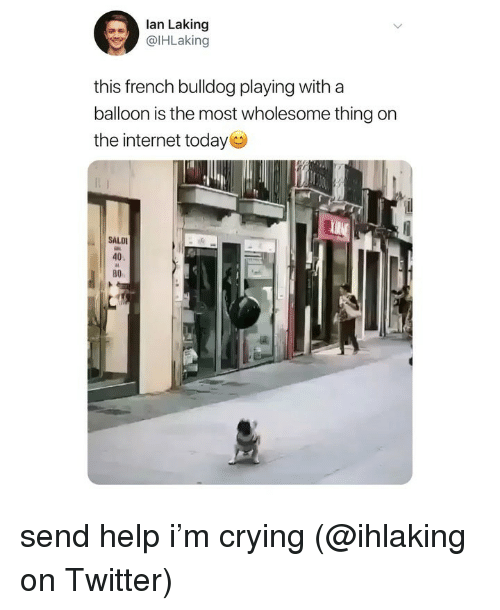 balloon: lan Laking  @lHLaking  this french bulldog playing with a  balloon is the most wholesome thing on  the internet today  SALD  40  во send help i'm crying (@ihlaking on Twitter)