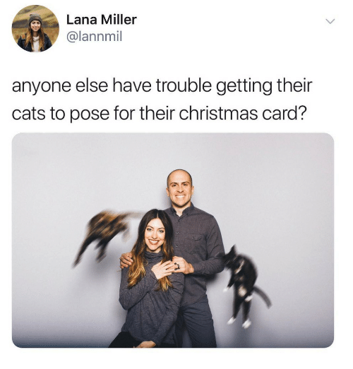 christmas-card: Lana Miller  @lannmil  anyone else have trouble getting their  cats to pose for their christmas card?