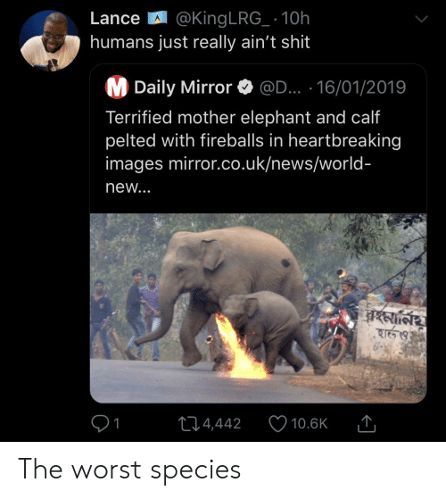 Uk News: LanceA @King LRG_ 10h  humans just really ain't shit  M Daily Mirror  @D... 16/01/2019  Terrified mother elephant and calf  pelted with fireballs in heartbreaking  images mirror.co.uk/news/world-  new...  24,442  10.6K The worst species