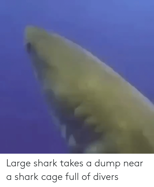 Shark: Large shark takes a dump near a shark cage full of divers