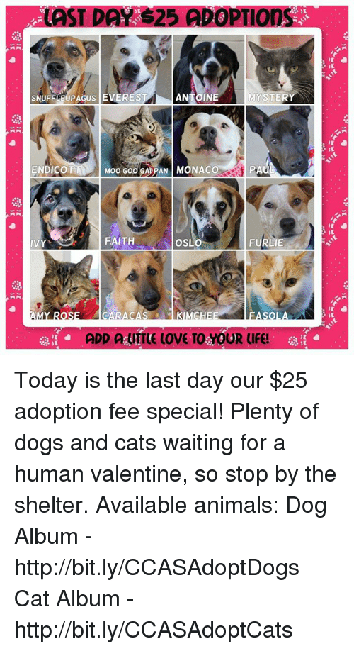 animated dog: LAST DAA S25 ADOPTIOns  SNUFFLEUPAGUS EVEREST  ANTOINE  MYSTER  ENDICOTT  Moo Goo SAPAN MONACO  PA  FAITH  OSL  FURLIE  IVY  ADD AURTE UOVE TO YOUR UFE! Today is the last day our $25 adoption fee special! Plenty of dogs and cats waiting for a human valentine, so stop by the shelter.  Available animals: Dog Album - http://bit.ly/CCASAdoptDogs Cat Album - http://bit.ly/CCASAdoptCats