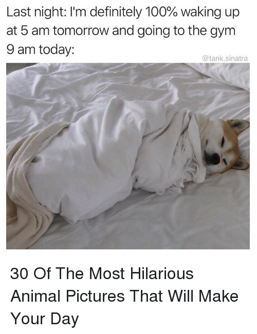 5 AM: Last night: I'm definitely 100% waking up  at 5 am tomorrow and going to the gym  9 am today:  @tank.sinatra 30 Of The Most Hilarious Animal Pictures That Will Make Your Day
