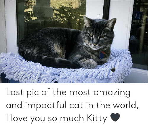 love you so much: Last pic of the most amazing and impactful cat in the world, I love you so much Kitty 🖤