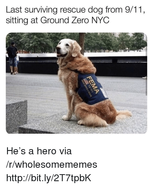 rescue dog: Last surviving rescue dog from 9/11,  sitting at Ground Zero NYC He's a hero via /r/wholesomememes http://bit.ly/2T7tpbK