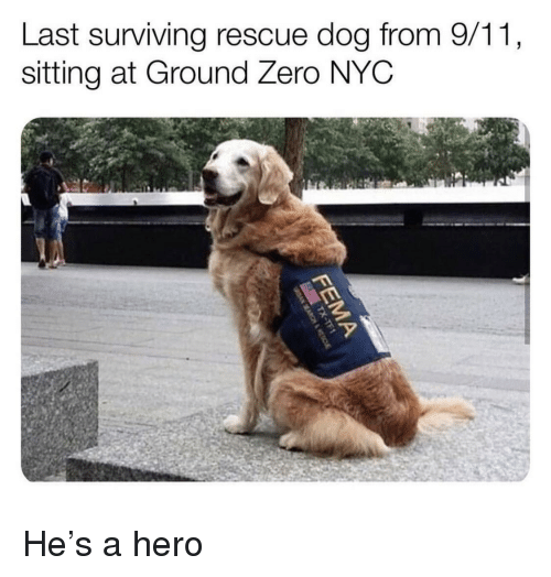 rescue dog: Last surviving rescue dog from 9/11,  sitting at Ground Zero NYC He's a hero