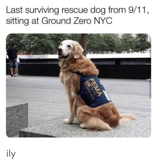 rescue dog: Last surviving rescue dog from 9/11  sitting at Ground Zero NYC ily