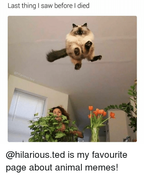 Animated Memes: Last thing I saw before died @hilarious.ted is my favourite page about animal memes!