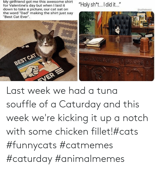 notch: Last week we had a tuna souffle of a Caturday and this week we're kicking it up a notch with some chicken fillet!#cats #funnycats #catmemes #caturday #animalmemes