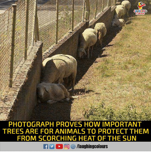 Animals, Heat, and Trees: LAUGHING  PHOTOGRAPH PROVES HOW IMPORTANT  TREES ARE FOR ANIMALS TO PROTECT THEM  FROM SCORCHING HEAT OF THE SUN