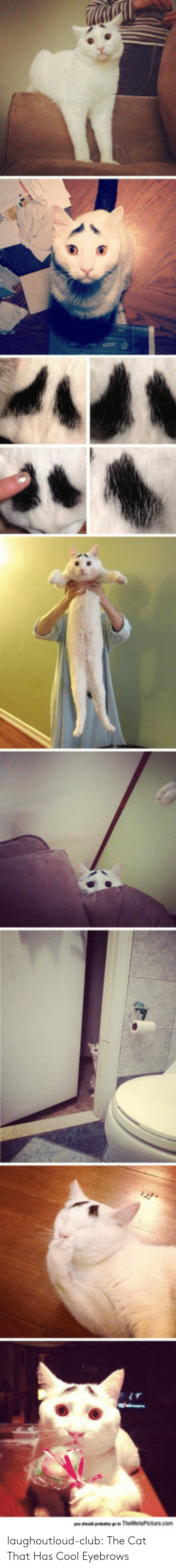eyebrows: laughoutloud-club:  The Cat That Has Cool Eyebrows