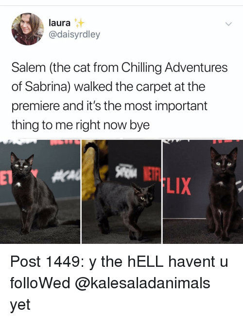 salem: laura  @daisyrdley  Salem (the cat from Chilling Adventures  of Sabrina) walked the carpet at the  premiere and it's the most important  thing to me right now bye  LIX Post 1449: y the hELL havent u folloWed @kalesaladanimals yet