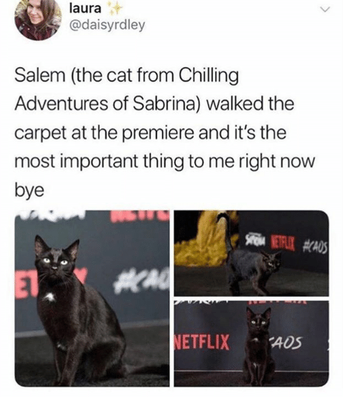 salem: laura  @daisyrdley  Salem (the cat from Chilling  Adventures of Sabrina) walked the  carpet at the premiere and it's the  most important thing to me right now  bye  ETFLIX ADS