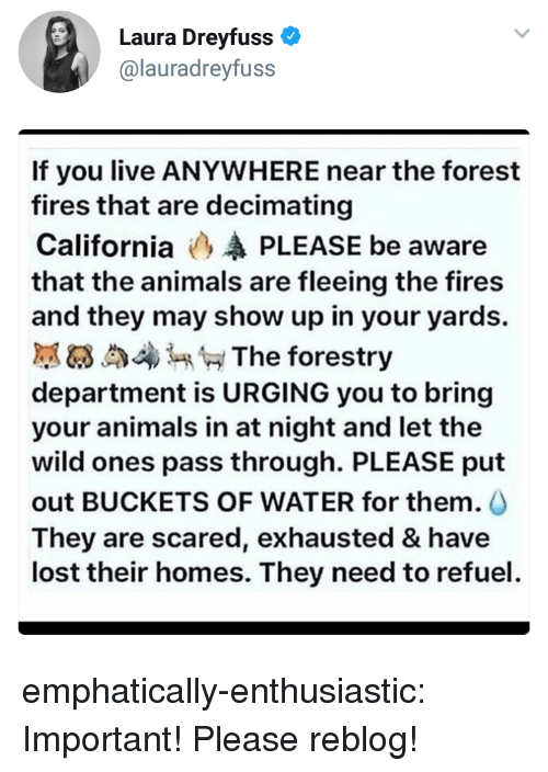 buckets: Laura Dreyfuss  @lauradreyfuss  If you live ANYWHERE near the forest  fires that are decimating  California (3 PLEASE be aware  that the animals are fleeing the fires  and they may show up in your yards.  膩63 4 The forestry  department is URGING you to bring  your animals in at night and let the  wild ones pass through. PLEASE put  out BUCKETS OF WATER for them.  They are scared, exhausted & have  lost their homes. They need to refuel emphatically-enthusiastic: Important! Please reblog!
