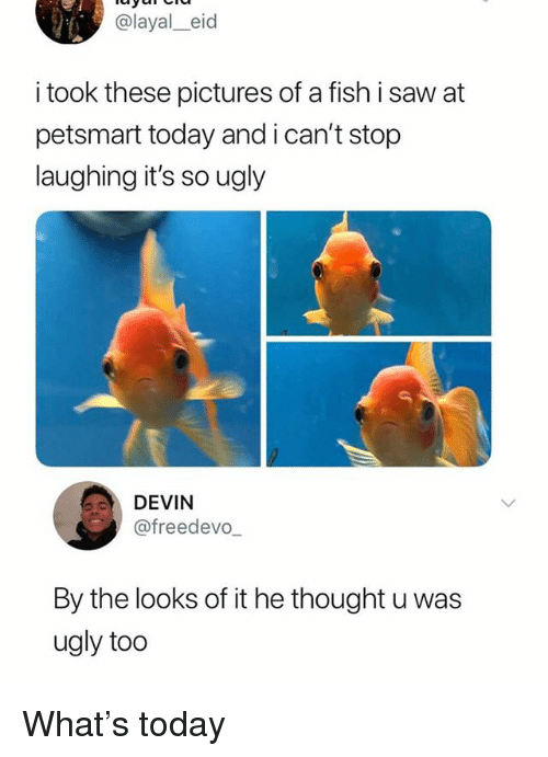 Memes, Saw, and Ugly: @layal_eid  i took these pictures of a fish i saw at  petsmart today and i can't stop  laughing it's so ugly  DEVIN  @freedevo,  By the looks of it he thought u was  ugly too What's today
