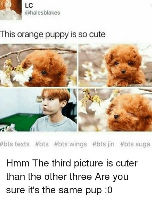 Bts Bts: LC  @halesblakes  This orange puppy is so cute  #bts texts #bts #bts wings #bts jin #bts suga Hmm The third picture is cuter than the other three Are you sure it's the same pup :0