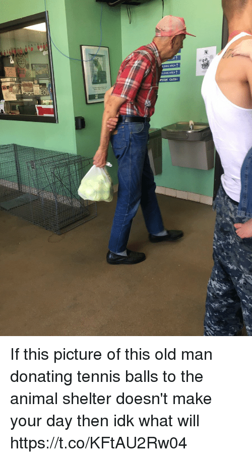 Cats, Old Man, and Animal: LDING AREA  DLDING AREA  PTION CATS If this picture of this old man donating tennis balls to the animal shelter doesn't make your day then idk what will https://t.co/KFtAU2Rw04