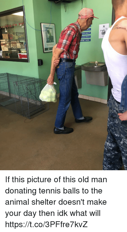 Cats, Old Man, and Animal: LDING AREA  OLDING AREA  PTION CATS If this picture of this old man donating tennis balls to the animal shelter doesn't make your day then idk what will https://t.co/3PFfre7kvZ