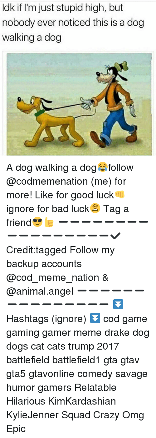 Bad, Cats, and Crazy: ldk if I'm just stupid high, but  nobody ever noticed this is a dog  walking a dog A dog walking a dog😂follow @codmemenation (me) for more! Like for good luck👊 ignore for bad luck😩 Tag a friend😎👍 ➖➖➖➖➖➖➖➖➖➖➖➖➖➖➖➖➖✔ Credit:tagged Follow my backup accounts @cod_meme_nation & @animal.angel ➖➖➖➖➖➖➖➖➖➖➖➖➖➖➖ ⏬ Hashtags (ignore) ⏬ cod game gaming gamer meme drake dog dogs cat cats trump 2017 battlefield battlefield1 gta gtav gta5 gtavonline comedy savage humor gamers Relatable Hilarious KimKardashian KylieJenner Squad Crazy Omg Epic