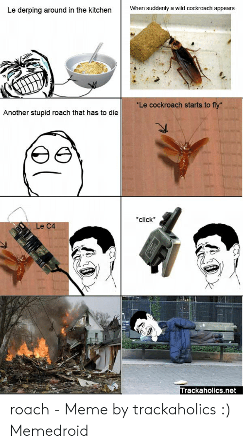 Roach Meme: Le derping around in the kitchenWhen suddenly a wild cockroach appears  Le cockroach starts to fly  Another stupid roach that has to die  click  La Ca  Trackaholics.net roach - Meme by trackaholics :) Memedroid