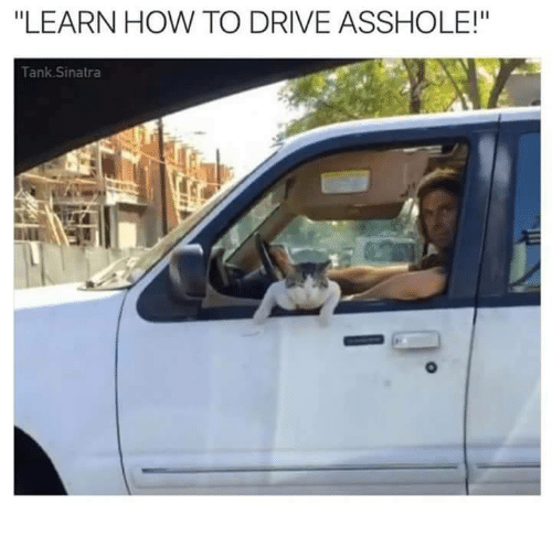 """Assholl: """"LEARN HOW TO DRIVE ASSHOLE!""""  Tank Sinatra"""