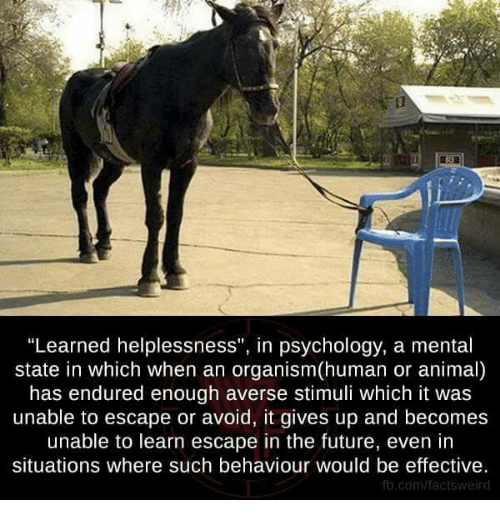 """Memes, Psychology, and Aversion: """"Learned helplessness"""", in psychology, a mental  state in which when an organism(human or animal)  has endured enough averse stimuli which it was  unable to escape or avoid, it gives up and becomes  unable to learn escape in the future, even in  situations where such behaviour would be effective.  fb.com/factsweird"""