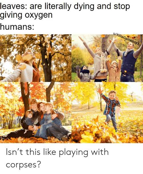 Oxygen: leaves: are literally dying and stop  giving oxygen  humans:  u/KillaGameboyx  rePics Isn't this like playing with corpses?
