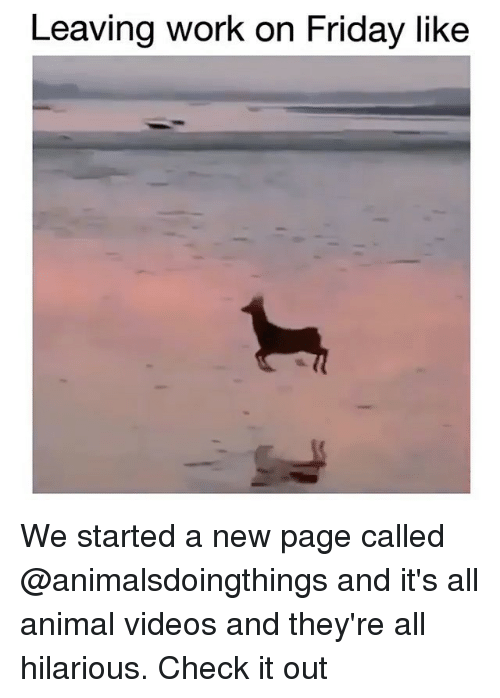 Friday, Videos, and Work: Leaving work on Friday like We started a new page called @animalsdoingthings and it's all animal videos and they're all hilarious. Check it out