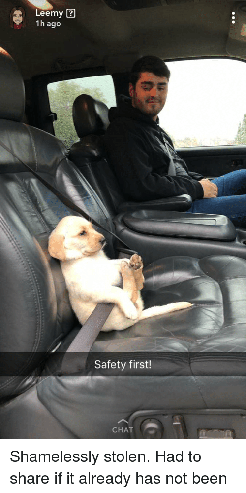 Chat, Been, and First: Leemy ?  1h ago  Safety first!  CHAT Shamelessly stolen. Had to share if it already has not been