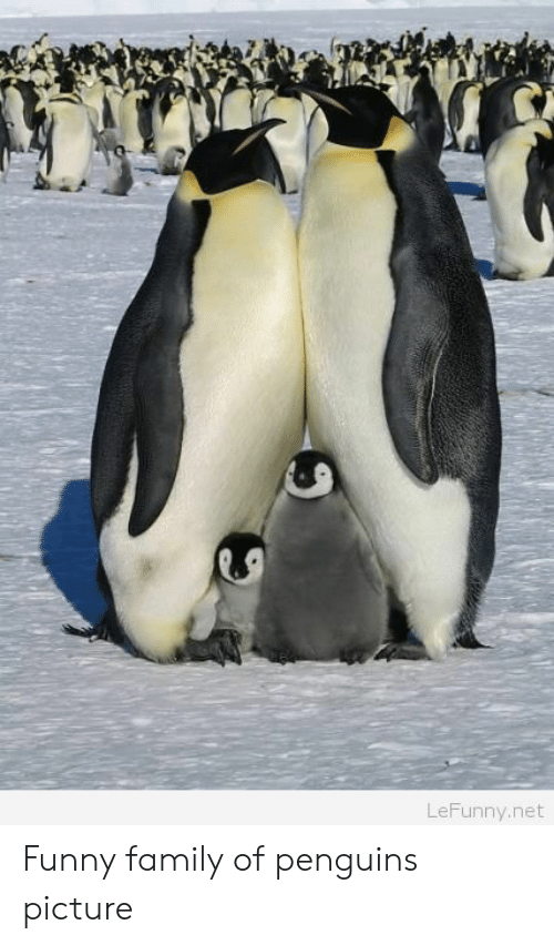 Funny Family: LeFunny.net Funny family of penguins picture