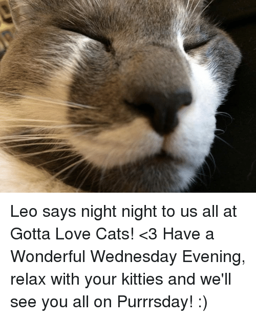 Have A Wonderful Wednesday: Leo says night night to us all at Gotta Love Cats! <3 Have a Wonderful Wednesday Evening, relax with your kitties and we'll see you all on Purrrsday! :)