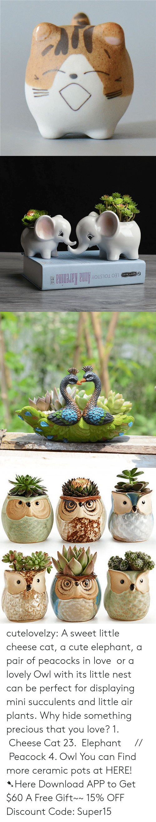 classics: LEO TOLSTOYAnna Karenina  Signet Classics cutelovelzy: A sweet little cheese cat, a cute elephant, a pair of peacocks in love  or a lovely Owl with its little nest can be perfect for displaying mini succulents and little air plants. Why hide something precious that you love? 1.  Cheese Cat  23.  Elephant     //    Peacock  4. Owl  You can Find more ceramic pots at HERE!  ➷Here Download APP to Get $60  A Free Gift~~  15% OFF Discount Code: Super15
