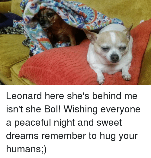 memes: Leonard here she's behind me isn't she Bol! Wishing everyone a peaceful night and sweet dreams remember to hug your humans;)