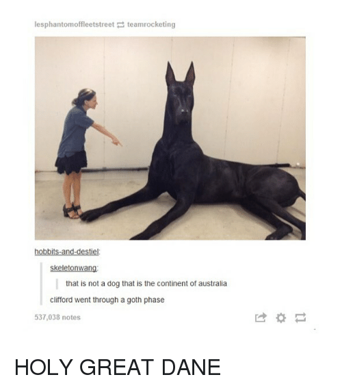 great dane: lesphantomoffleetstreet teamrocketing  hobbits-and-destiel  skeletonwang  that is not a dog that is the continent of australia  clifford went through a goth phase  537,038 notes  は* HOLY GREAT DANE