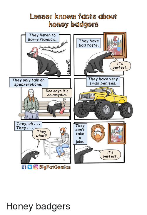 honey badgers: Lesser known facts about  honey badgers  They listen to  Barry Manilow  hThey have  bad taste.  lt's  perfect.  They only talk on  speakerphone.  They have very  small penises.  Doc says it's  chlamydia.  They, uh .. .  They  They  can't  take  They  what?  joke.  lt's  perfect.  BigFatComics
