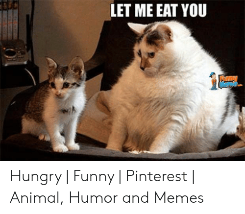Funny Hungry Memes: LET ME EAT YOU Hungry   Funny   Pinterest   Animal, Humor and Memes