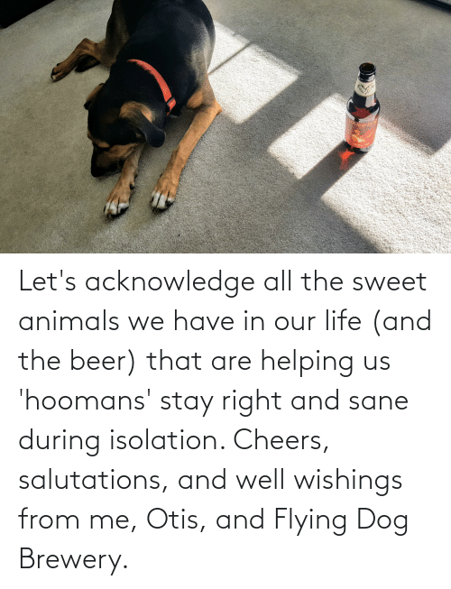 salutations: Let's acknowledge all the sweet animals we have in our life (and the beer) that are helping us 'hoomans' stay right and sane during isolation. Cheers, salutations, and well wishings from me, Otis, and Flying Dog Brewery.