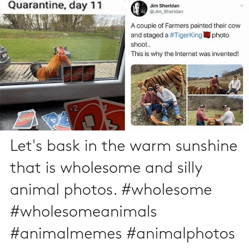 let's: Let's bask in the warm sunshine that is wholesome and silly animal photos. #wholesome #wholesomeanimals #animalmemes #animalphotos