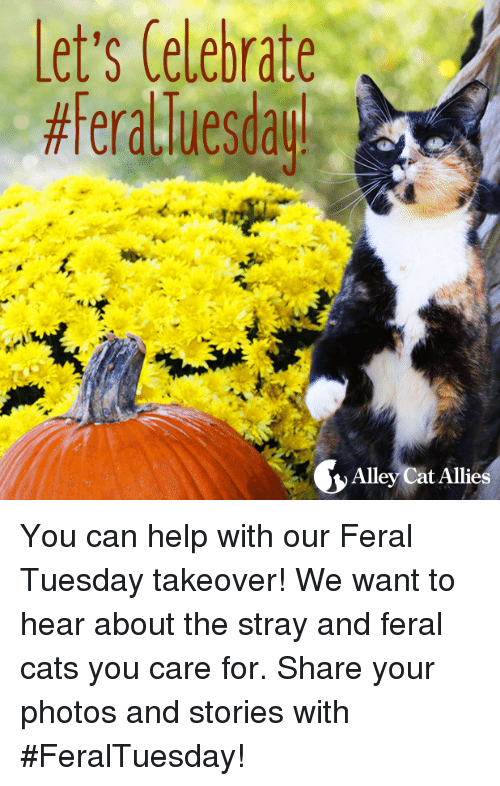 Memes, Ally, and Help: Let's Celebrate  Alley Cat Allies You can help with our Feral Tuesday takeover! We want to hear about the stray and feral cats you care for.   Share your photos and stories with #FeralTuesday!