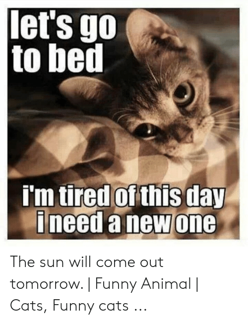 Sun Will Come Out Tomorrow: let's go  to bed  tired of this day  'm  ineeda newone The sun will come out tomorrow. | Funny Animal | Cats, Funny cats ...
