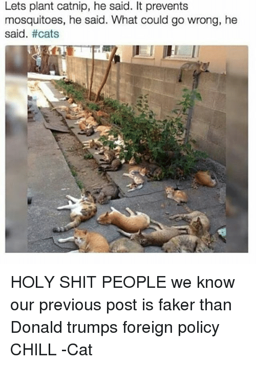 Donald Trump, Memes, and 🤖: Lets plant catnip, he said. It prevents  mosquitoes, he said. What could go wrong, he  said. HOLY SHIT PEOPLE we know our previous post is faker than Donald trumps foreign policy CHILL -Cat