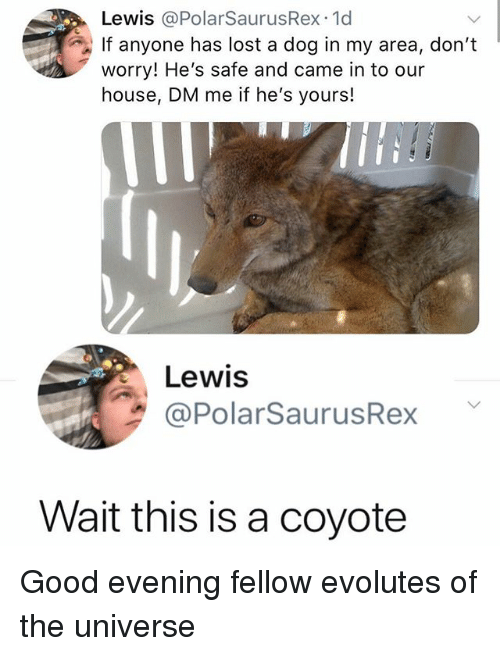 Memes, Lost, and Coyote: Lewis @PolarSaurusRex.1d  If anyone has lost a dog in my area, don't  worry! He's safe and came in to our  house, DM me if he's yours!  Lewis  @PolarSaurusRex  Wait this is a coyote Good evening fellow evolutes of the universe