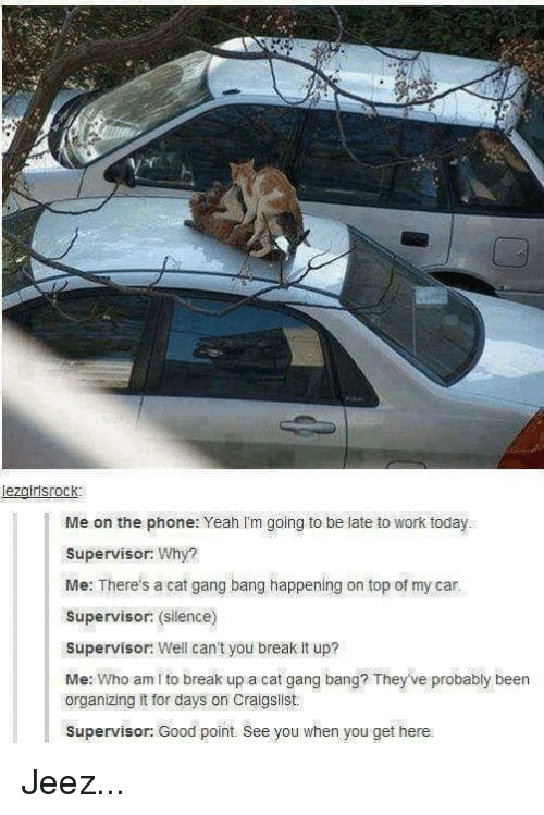 Cat Gang Bang: lezairisrock  Me on the phone: Yeah I'm going to be late to work today  Supervisor: Why?  Me: There's a cat gang bang happening on top of my car.  Supervisor: (silence)  Supervisor: Well can't you break it up?  Me: Who am i to break up a cat gang bang? They've probably been  organizing it for days on Craigslist  Supervisor: Good point. See you when you get here.