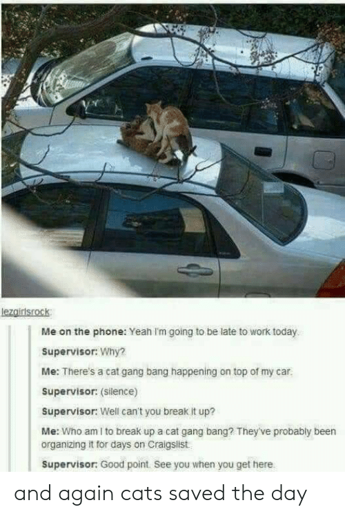 Cat Gang Bang: lezairisrock  Me on the phone: Yeah I'm going to be late to work today  Supervisor: Why?  Me: There's a cat gang bang happening on top of my car  Supervisor: (silence)  Supervisor: Well can't you break It up?  Me: Who am I to break up a cat gang bang? They've probably been  organizing it for days on Craigslist  Supervisor: Good point. See you when you get here and again cats saved the day