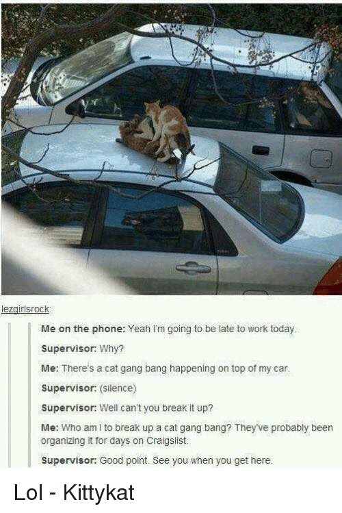 Cat Gang Bang: lezairlsrock  Me on the phone: Yeah I'm going to be late to work today  Supervisor: Why?  Me: There's a cat gang bang happening on top of my car  Supervisor: (silence)  Supervisor: Well can't you break it up?  Me: Who am I to break up a cat gang bang? They've probably been  organizing it for days on Craigslist  Supervisor: Good point. See you when you get here. Lol - Kittykat