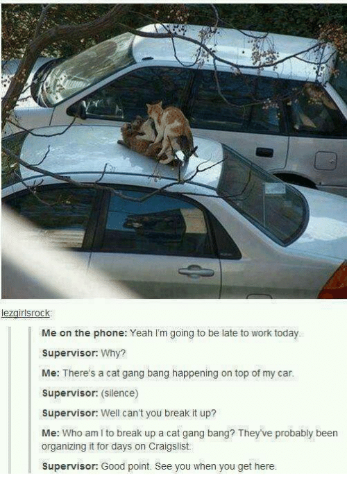 Cat Gang Bang: lezairlsrock  Me on the phone: Yeah Im going to be late to work today.  Supervisor: Why?  Me: There's a cat gang bang happening on top of my car.  Supervisor: (silence)  Supervisor: Well can't you break it up?  Me: Who am I to break up a cat gang bang? They've probably been  organizing it for days on Craigslist.  supervisor: Good point. See you when you get here.