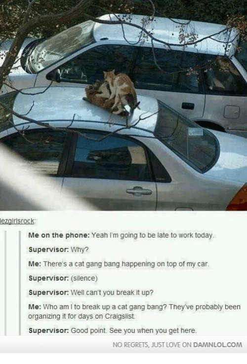 Cat Gang Bang: lezairlsrock  Me on the phone: Yeah I'm going to be late to work today.  Supervisor: Why?  Me: There's a cat gang bang happening on top of my car.  Supervisor: (silence)  Supervisor: Well can't you break it up?  Me: Who am I to break up a cat gang bang? They've probably been  organizing it for days on Craigslist  Supervisor: Good point. See you when you get here.  NO REGRETS, JUST LOVE ON DAMNLOL.COM