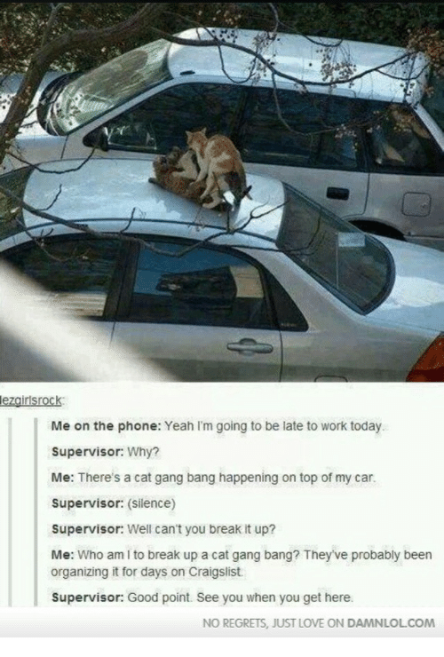 Cat Gang Bang: lezairlsrock  Me on the phone: Yeah I'm going to be late to work today  Supervisor: Why?  Me: There's a cat gang bang happening on top of my car.  Supervisor: (silence)  Supervisor: Well can't you break it up?  Me: Who am I to break up a cat gang bang? They've probably been  organizing it for days on Craigslist  Supervisor: Good point. See you when you get here  NO REGRETS, JUST LOVE ON DAMNLOLCOM