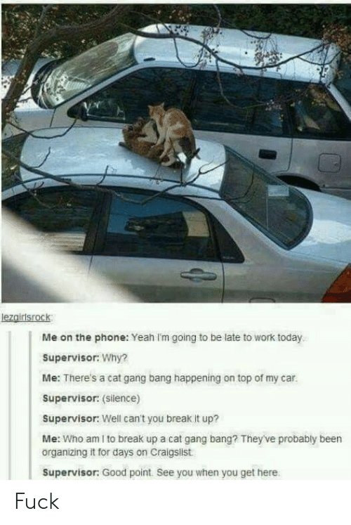 Cat Gang Bang: lezgirisrock  Me on the phone: Yeah Im going to be late to work today  Supervisor: Why?  Me: There's a cat gang bang happening on top of my car.  Supervisor: (Silence)  Supervisor: Well can't you break it up?  Me: Who am I to break up a cat gang bang? They've probably been  organizing it for days on Craigslist  Supervisor: Good point. See you when you get here Fuck